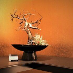 GINZA SIXにて新感覚アートBONSAI、「枯れ盆栽」の店頭販売をスタートの画像