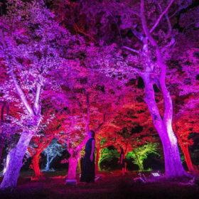 チームラボ、山口・宇部市 総合公園「ときわ公園」にて「チームラボ 宇部市ときわ公園 2017 呼応する森と彫刻」開催。の画像