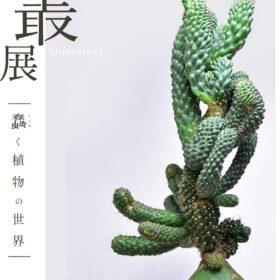 いい顔してる植物をコンセプトに、独自の美しさを提案する「叢」の展覧会をパルコミュージアムにて開催 の画像