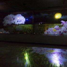 佐賀の夜景に花が咲き乱れる『光るアート県庁「SAGA」』の画像