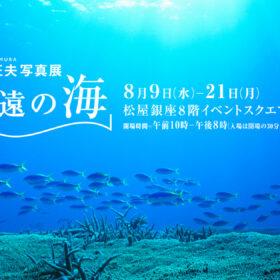水中カメラマン中村征夫 新作写真展「永遠の海」開催のお知らせの画像