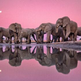 ナショナル ジオグラフィック写真展「美しき地球」 TIMBER YARD studio にて開催の画像