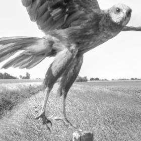 スティーブン・ギル展「Three Nature Studies」のご案内の画像
