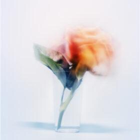 宇禄「かさね」写真展 5月10日より開催の画像